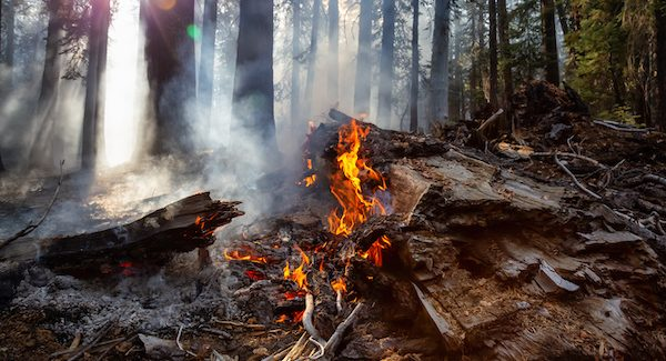 California Wildfires - How to Help